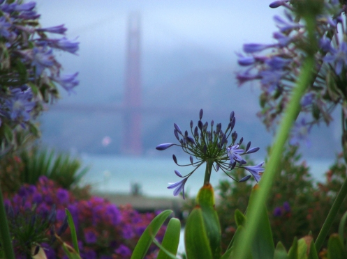 sanfranbridgeflowers
