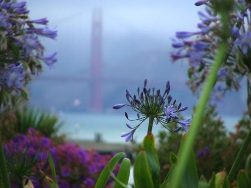 sanfranbridgeflowers